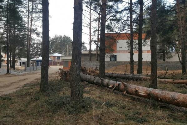 На фотоотчетливо видны белые метки на деревьях