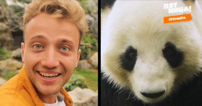 Ведущий сравнил панду с собой из-за кругов под глазами