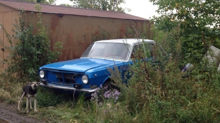 «Я паркуюсь как...»: любители природы и тайна синей «Волги»