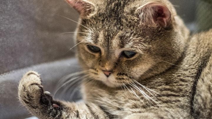 Сибиряк украл из зоомагазина две пачки корма для кота