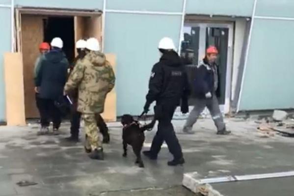 Вместе с полицейскими были и собаки, искавшие взрывные устройства