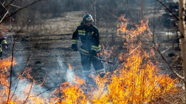 Под Новосибирском загорелась сухая трава