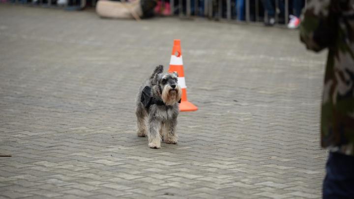 Рычание войны: в ЦПКиО боевые собаки спасали раненых и задерживали врагов