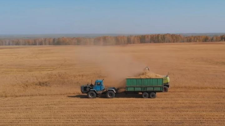 Краски осени: новосибирский блогер снял с высоты впечатляющие загородные пейзажи