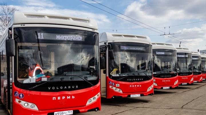 На покупку трамваев и автобусов Пермь потратит минимум 700 миллионов рублей