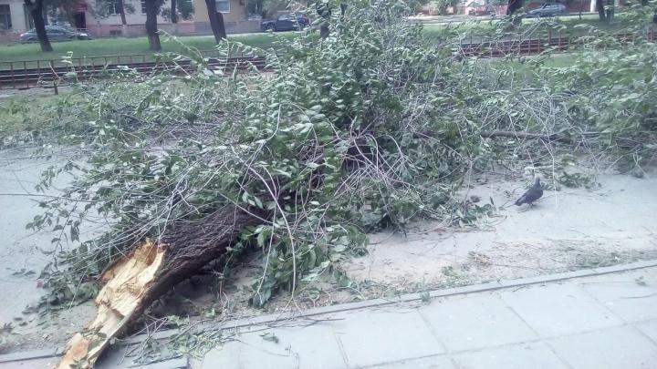 «На детской площадке 9 дней лежит дерево»: волгоградцы просят мэрию убрать сбитые ураганом ветки