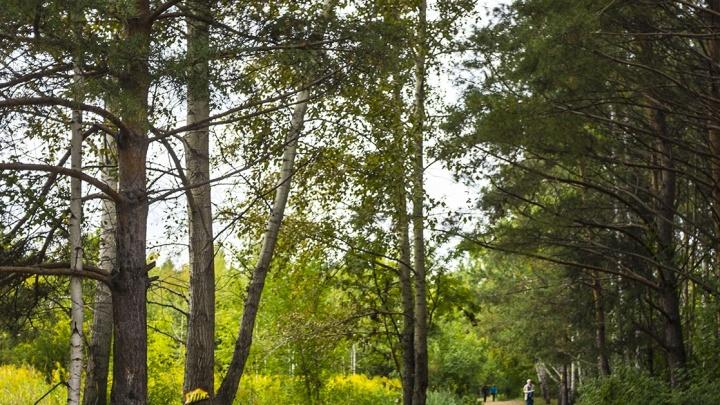 Велосипедист со скальпелем напал на двух прохожих в лесу