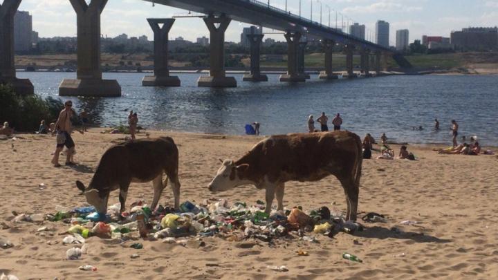 Вместо коров и мусора: колонка урбаниста о том, как превратить левый берег в «Волгоградскую Ривьеру»