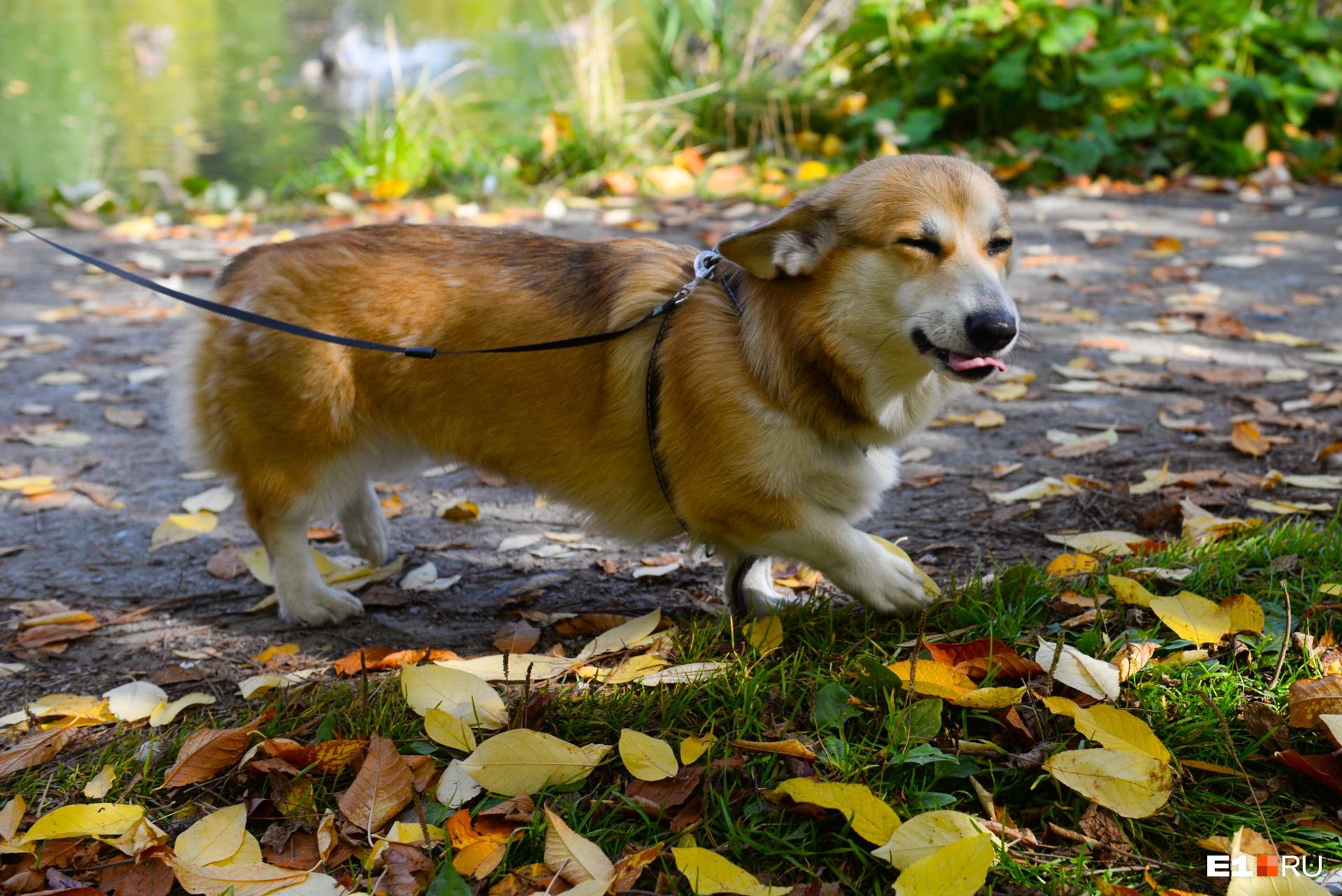 Если хотите кормить собаку натуральной едой, то составьте рацион вместе с ветеринаром