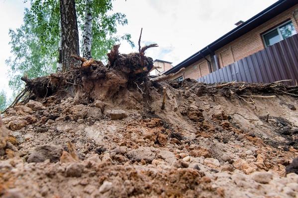 Участок разровняли, сняв верхних слой земли. В итоге была повреждена корневая система растущих рядом деревьев