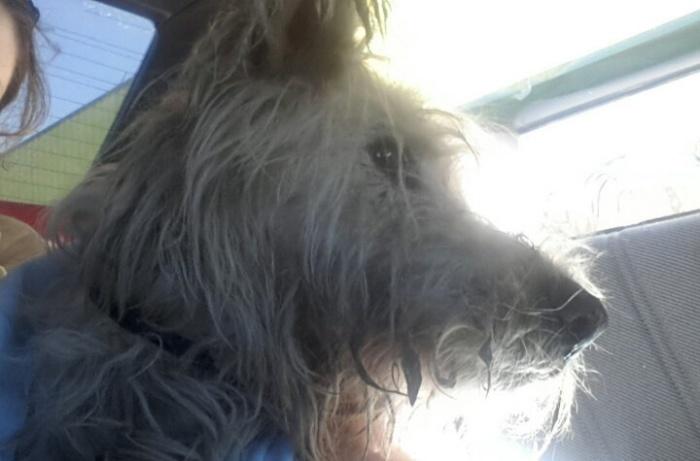 Чтобы обнаружить травму пса, врачи делали МРТ