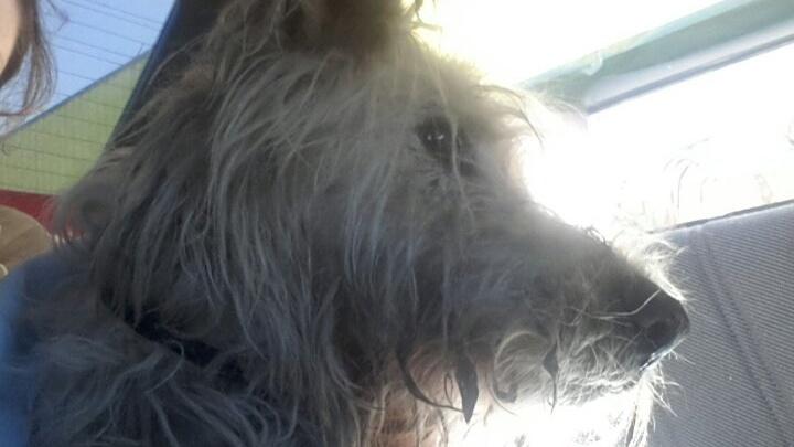 Новосибирцы спасли скулящую собаку с пулей в голове