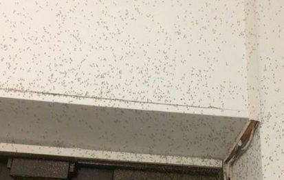 Несколько районов города атаковали полчища насекомых