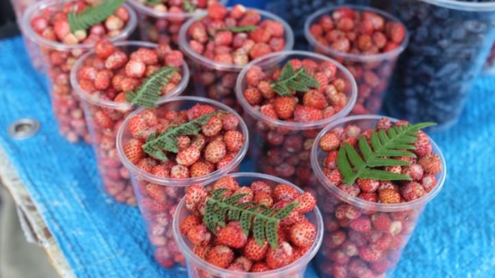 В Новосибирске начали торговать полевой клубникой и лесной земляникой