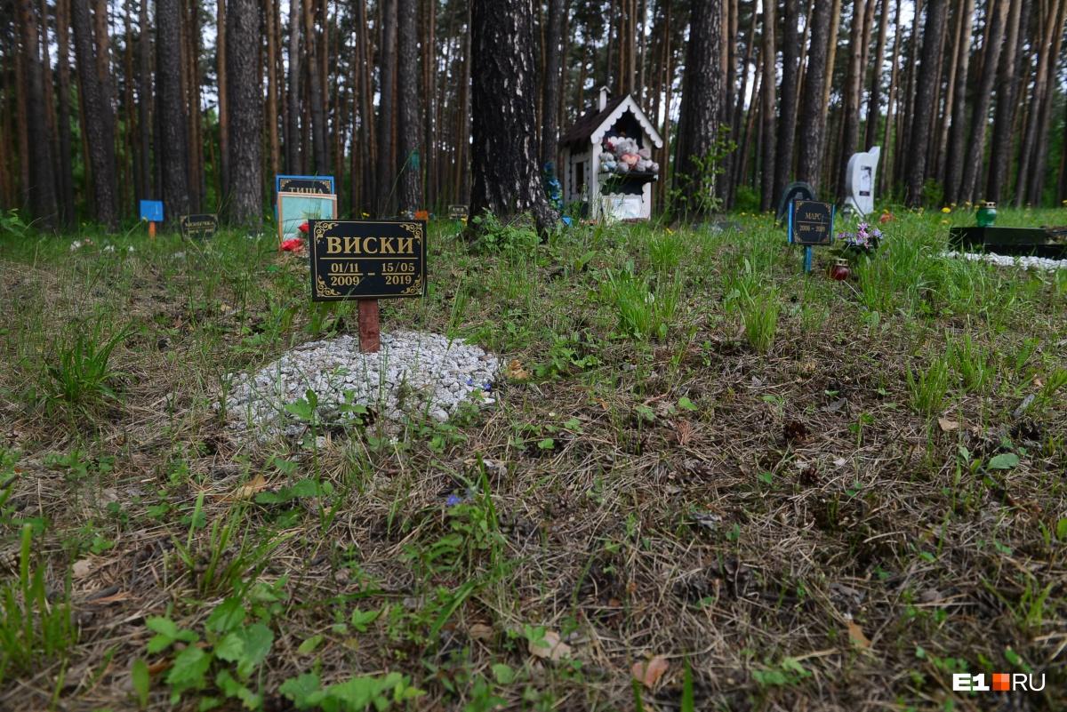 Лесная зона с захоронениями больше всего похожа на человеческую