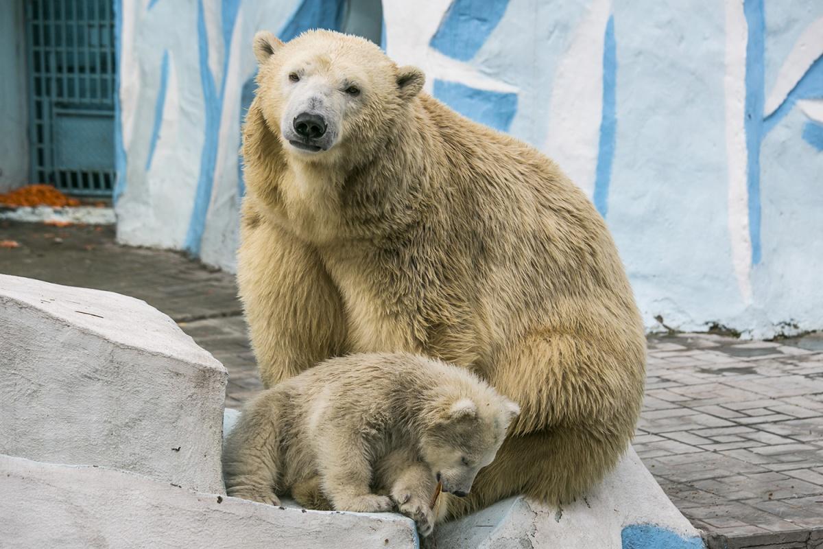 В зоопарк детей до 16 лет пропустят бесплатно