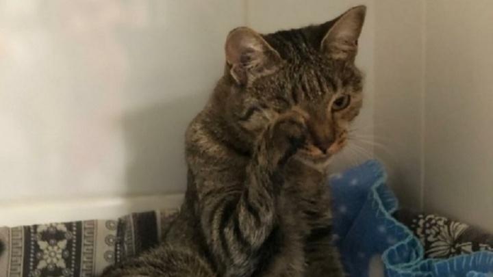 «Аномалией поигрались и выбросили»: в Волгограде в подъезде нашли кошку с врождённым уродством