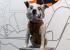 «Открыла Гагарину путь к звездам»: в Прикамье в 1961 году приземлилась собака Звёздочка