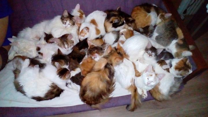 Не смогли бросить: в Ярославле семья приютила дома 20 котов и кошек, найденных в поле в мешке