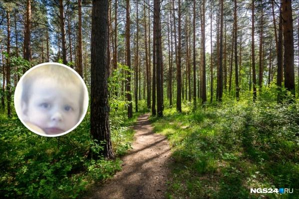 Мальчика нашли на болоте, он цел и невредим