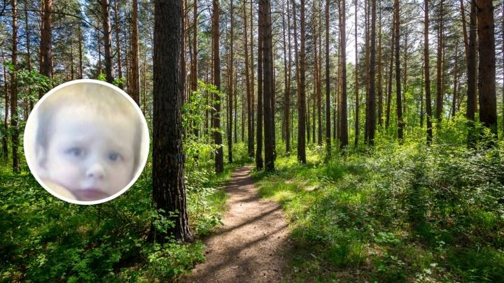Первые подробности того, как обнаружили в лесу 4-летнего ребенка