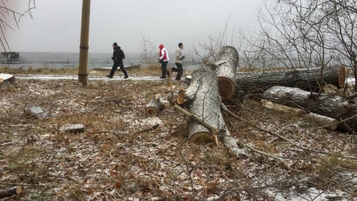 Лесорубы начали массово валить деревья вдоль озера Шарташ