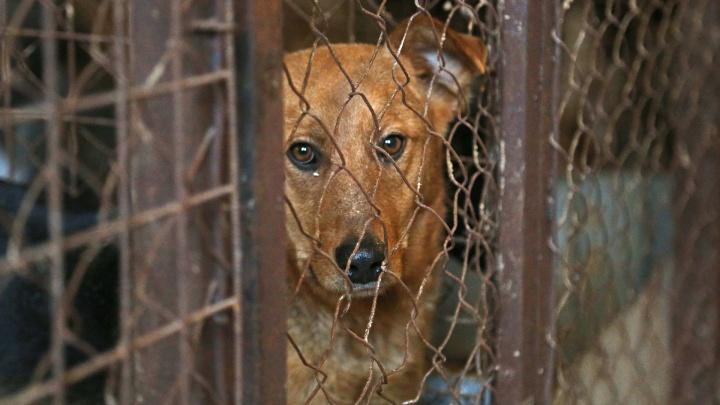 В Башкирии коммерсант присвоил больше 1 миллиона рублей, выделенных на отлов животных