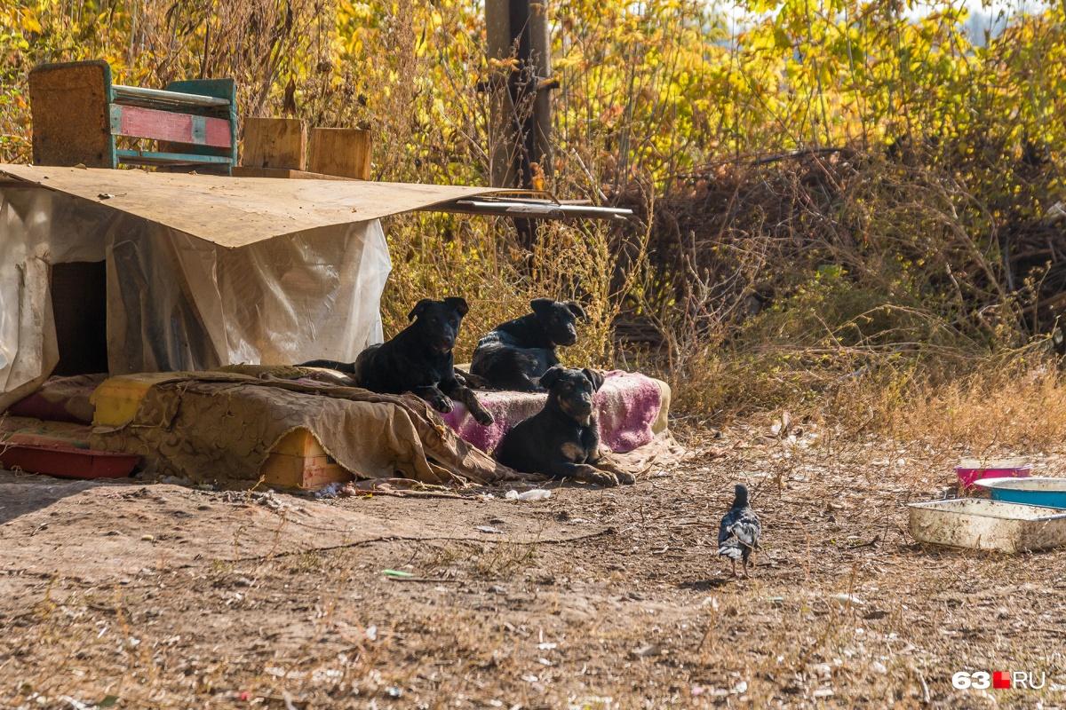 На каждое безнадзорное животное выделяют не больше 2500 рублей