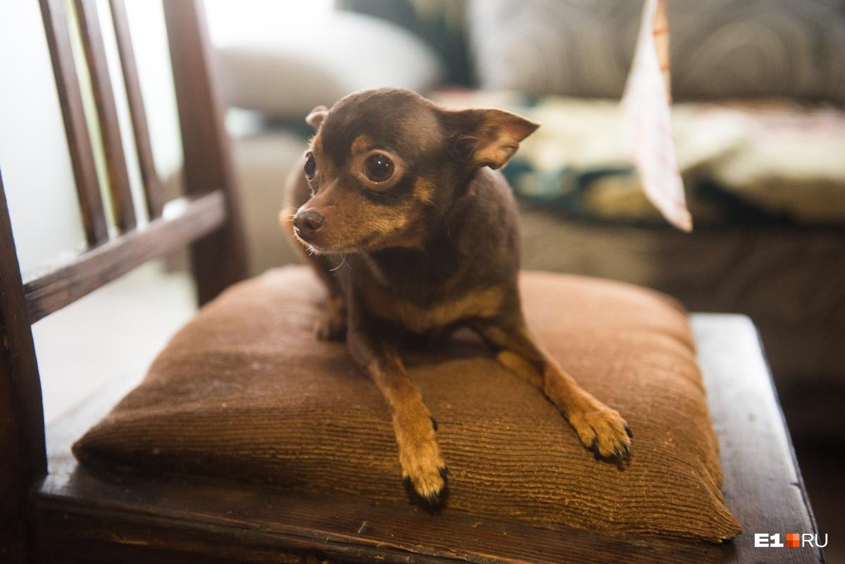 Этика— самая маленькая и самая строгая собака