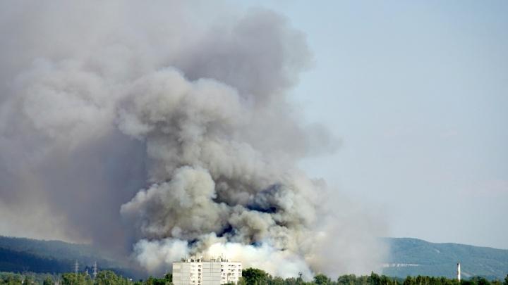 В Самарской области подсчитали, сколько леса уничтожил огонь у Курумоча