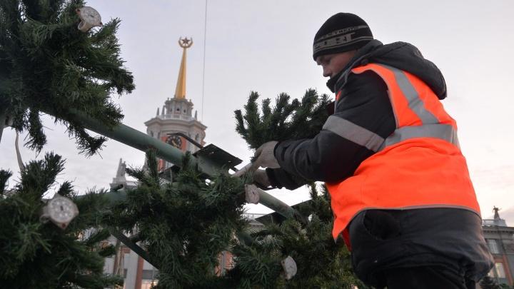 На площади 1905 года начала расти главная новогодняя ёлка Екатеринбурга