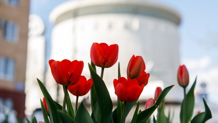 Уже к маю: центр Волгограда украсят цветами за 3 миллиона рублей