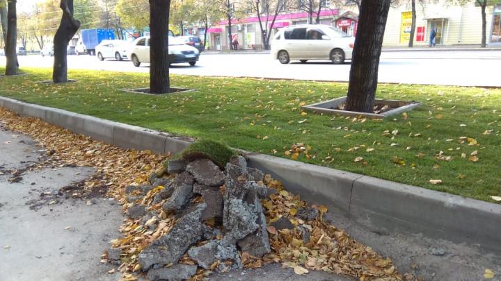 Замурованные деревья на Богдашке освободили из бетона