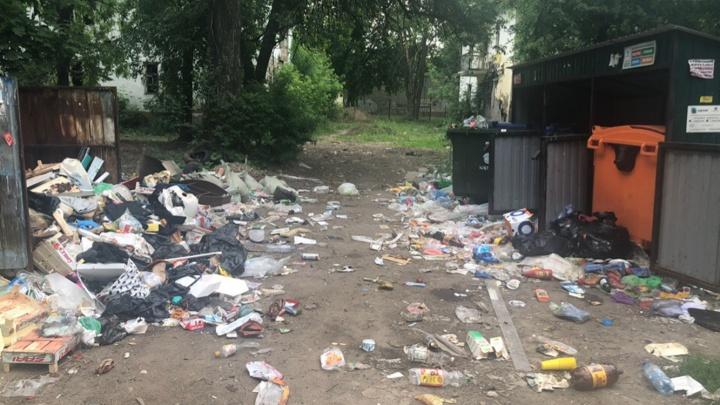 «Тут крысы пешком ходят»: в ярославском дворе контейнерные площадки превратились в свалку