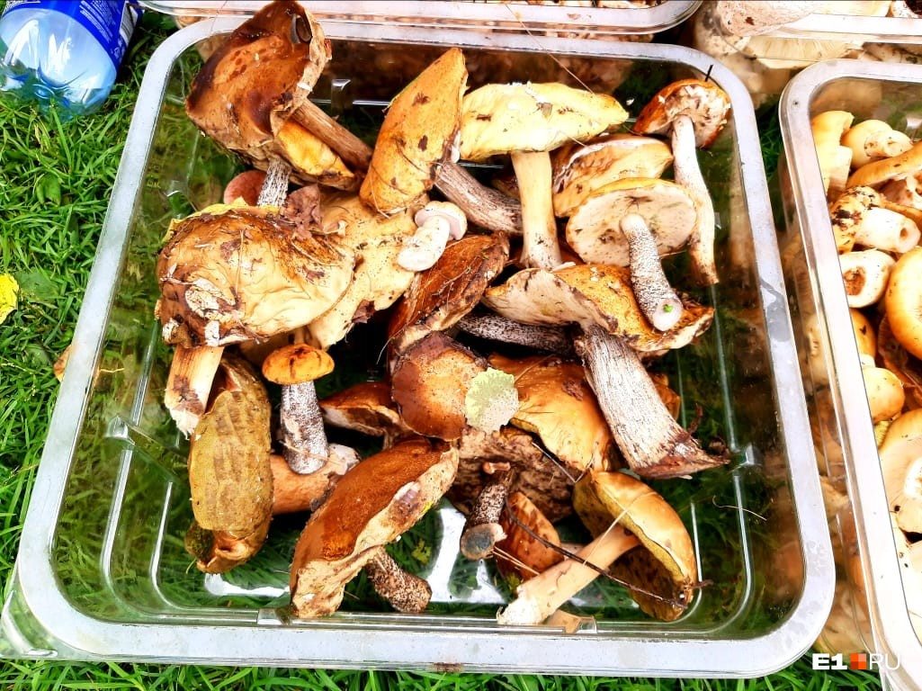Александр собирает грибы в знакомых местах