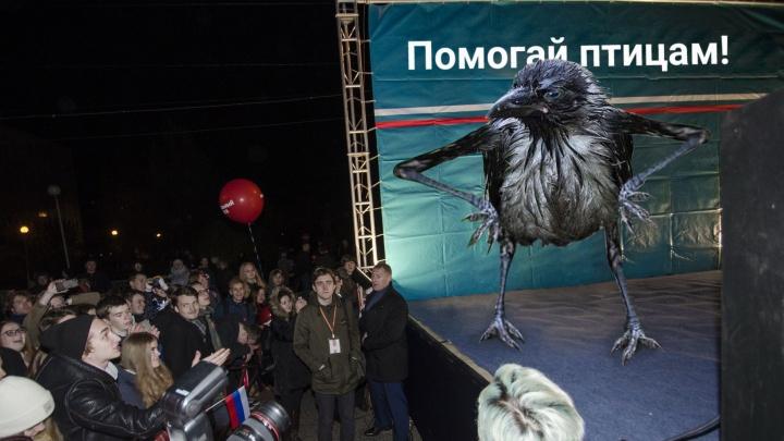 Как птахи и лыжники стали палкой в колесе архангельского антимусорного протеста