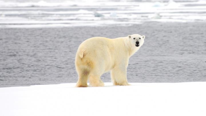 «Драматическое сокращение»: к 2040 году в Арктике могут исчезнуть летние морские льды