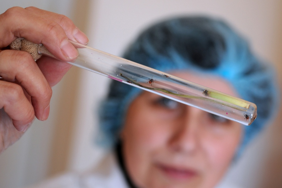 Клещи оказались переносчиками неведомой  болезни— Новосибирские ученые