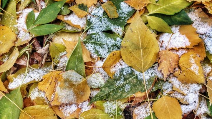 В Новосибирской области объявили предупреждение о заморозках