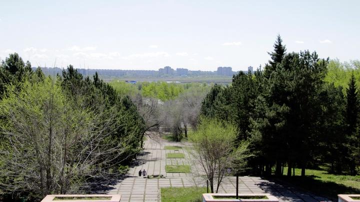 В Советском парке засадят деревьями спуски, с которых зимой катаются омичи