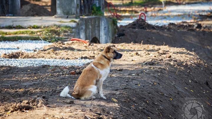 В Рыбинске пёс контролирует реконструкцию парка