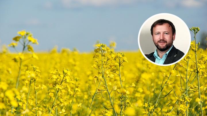 Фермер объяснил, зачем в крае в огромных объемах выращивают рапс