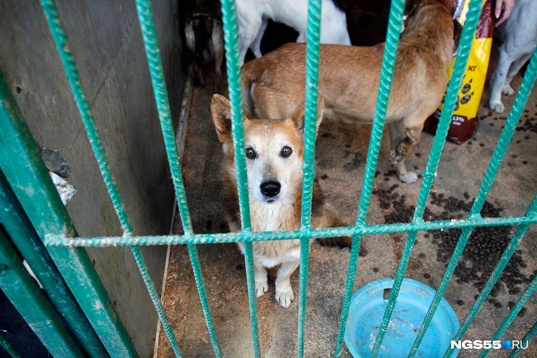 Собаки в САХе сейчас умирают не от истощения, а от болезней