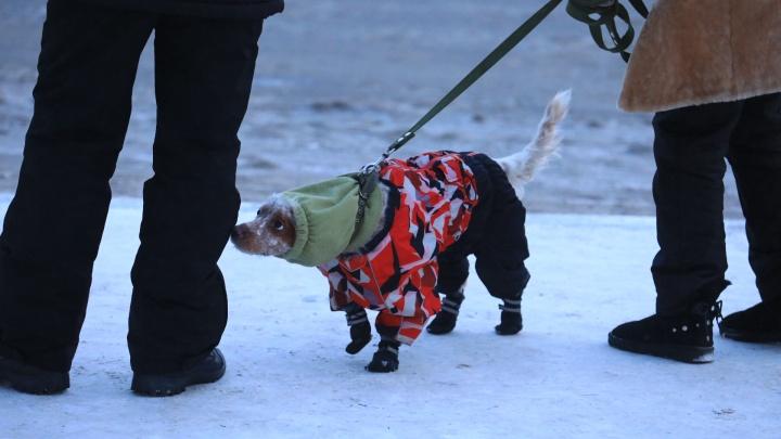 «На 18 градусов ниже нормы»: февраль в Красноярске будет аномально холодным, но к концу потеплеет