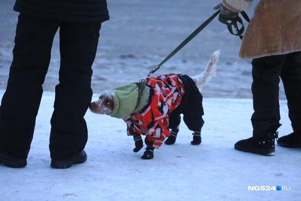 """Сегодня холодно всем, и даже собакам — как красноярцы переживают морозы <a href=""""https://ngs24.ru/news/more/65902501/?from=leadingstory"""" target=""""_blank"""" class=""""_"""">мы следим в онлайн-режиме</a>"""