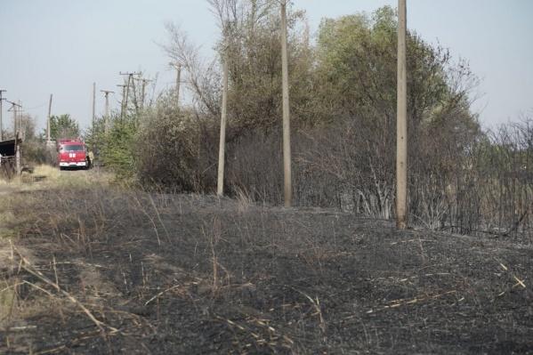 За 18 часов сгорело 10 гектаров рощи