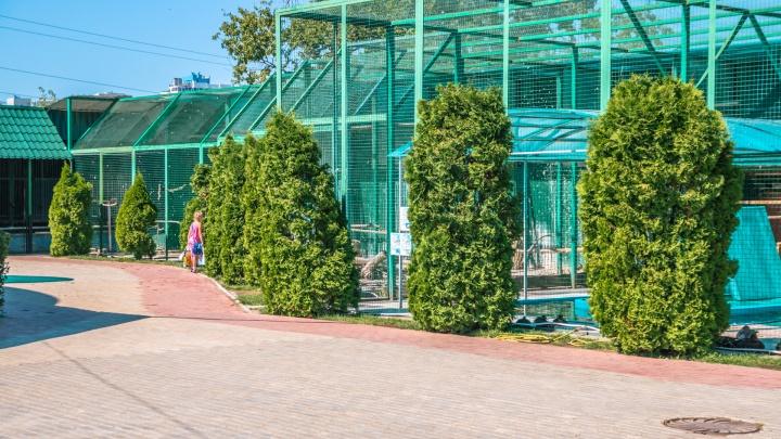 «Голосуйте за наш переезд»: сотрудники самарского зоопарка обратились к жителям Самары