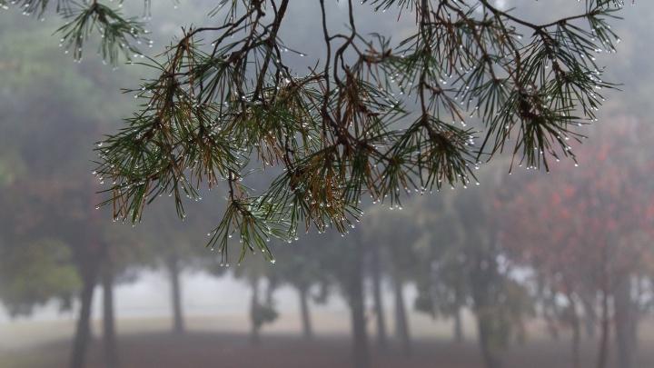 Ноль и дождь со снегом: синоптики рассказали, какой будет новогодняя ночь в Волгограде