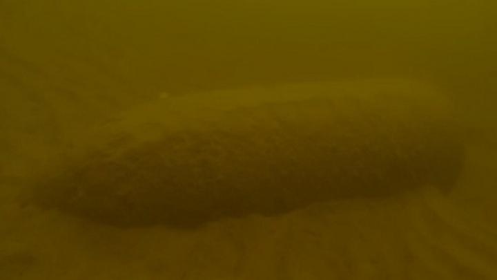 На популярном пляже напротив Волгограда нашли 250-килограммовый фугас