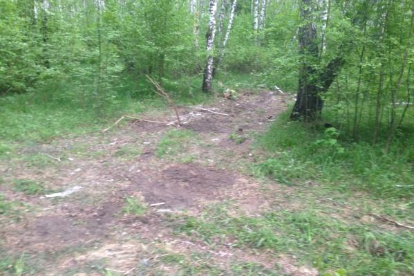 Очищенное от свалки место в Бугринской роще
